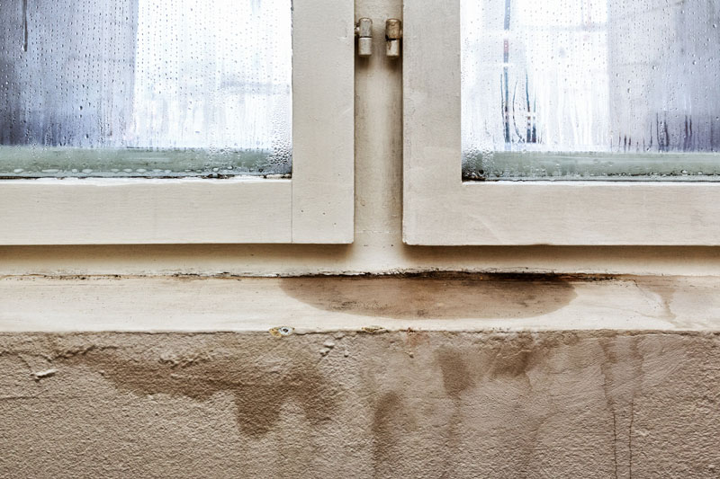 Should You Be Worried About Your Home's Mold?