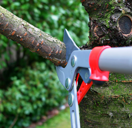 Tree Maintenance Tips for Homeowners