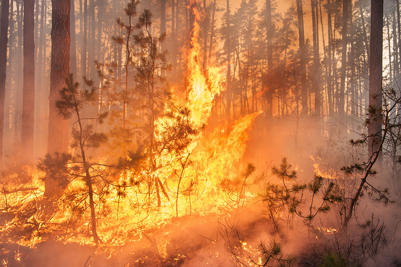 a wildfire in a forest